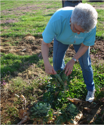Doris shows the Brussels sprouts in her garden