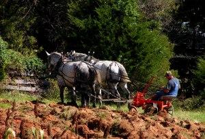 Fluvanna County's Old Farm Day